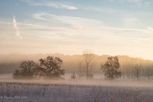 mist fog sunrise illinois frost savannah preserves lakecounty foggyscenes halfdayforestpreserve