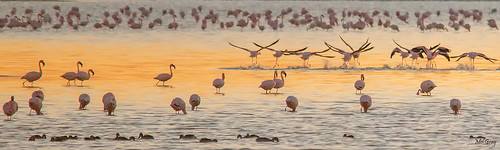 nature water birds sunrise flamingos namibia etosha