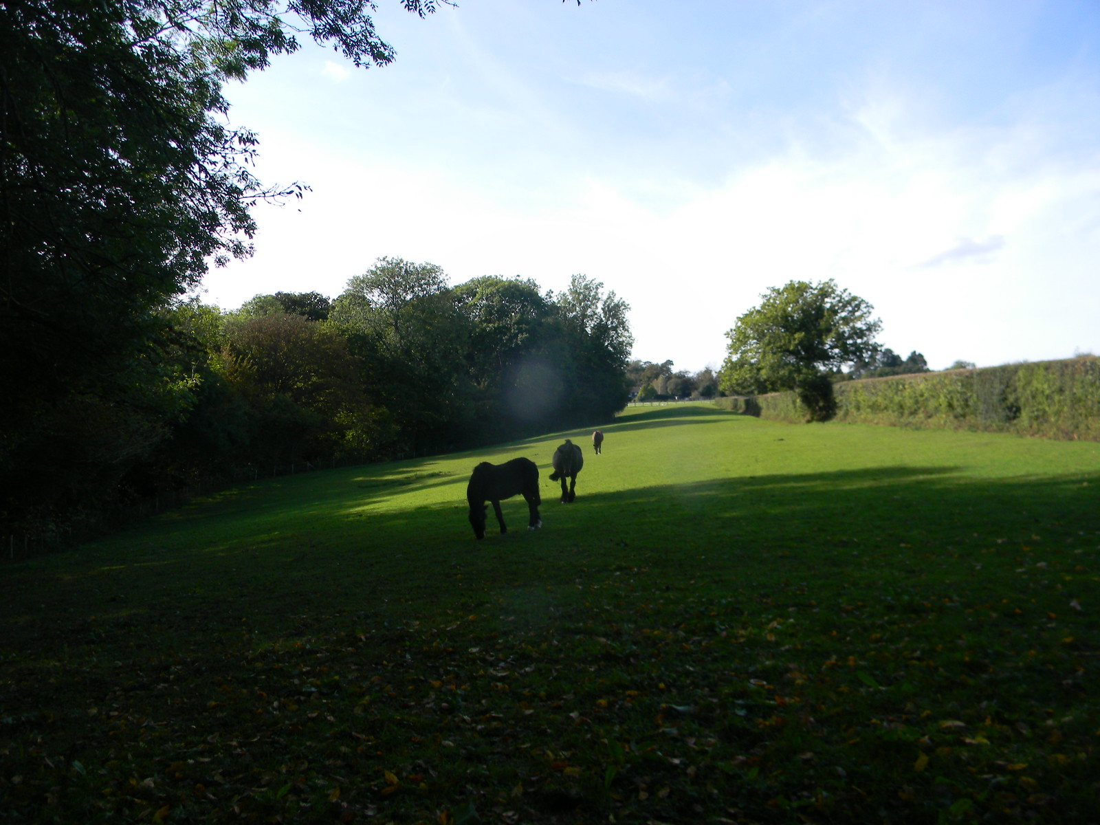 Horses in a field Stonegate Circular