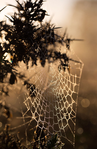 trees red sky mist london yellow forest sunrise eppingforest pond frost bokeh web frosty spidersweb wanstead hollowpond