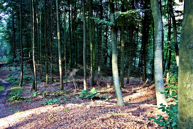 Goldengelchen Waldspaziergang Reichswald07