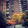 Found on my morning #commute! #fallcolor #latergram