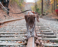 1658 Piper balancing on a track