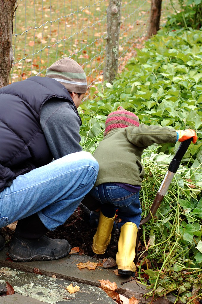 Rahm and Will harvesting sweet potatoes by Eve Fox, The Garden of Eating, copyright 2014