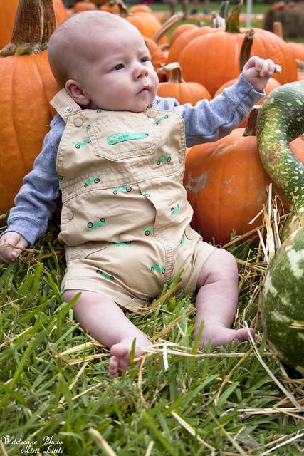 forest_pumpkin_red