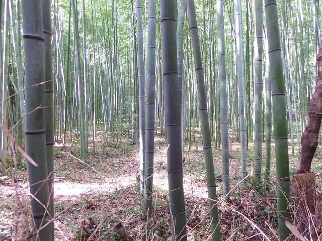Arashiyama Bamboo Road 2