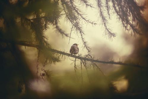 Bird | 06.06.14 | 01