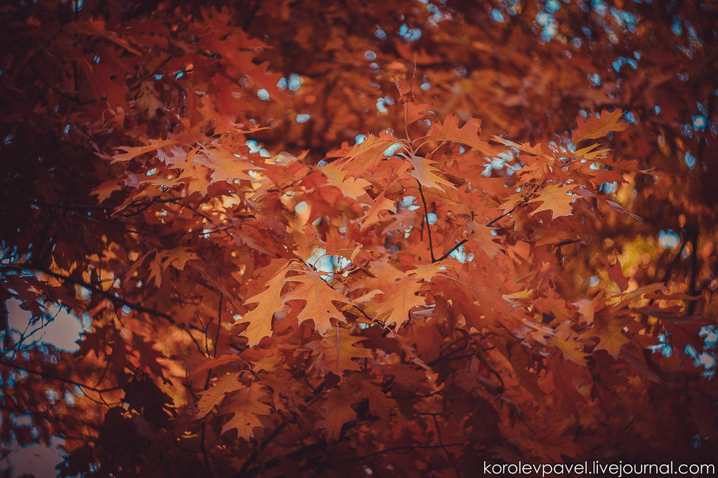 Autumn-188