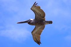 Isabela Island, Galapagos Islands
