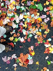 Both Feet in Autumn:  Friday, 5:49 PM