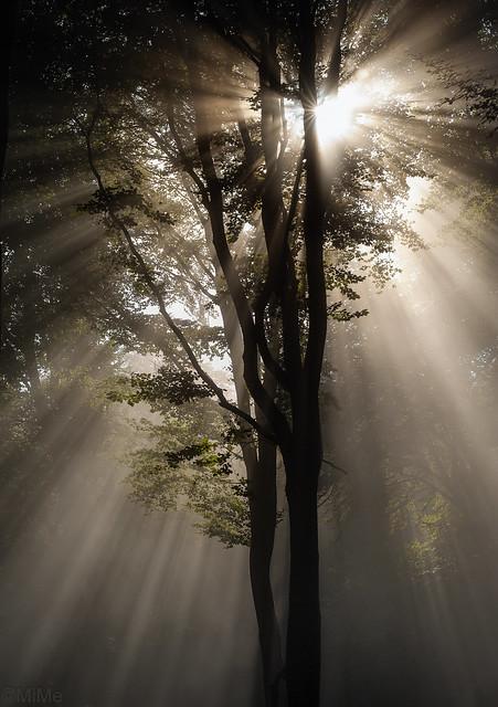 Nebel im Pfälzerwald, Nikon D700, PC-E Micro Nikkor 85mm f/2.8D