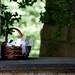flower basket by -gregg-