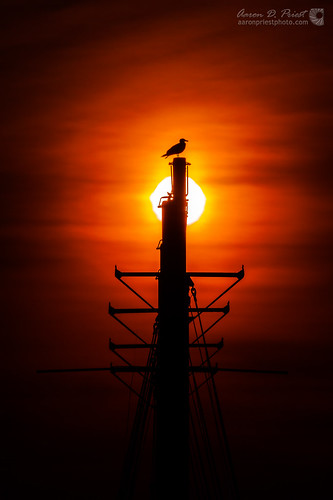 ocean orange sun bird silhouette sailboat sunrise sailing unitedstates seagull maine mast margarettodd barharbor