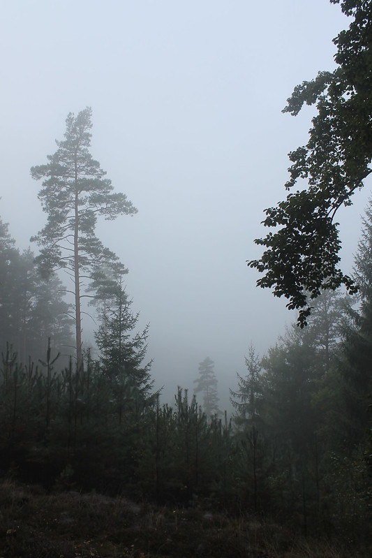 Foggy Kokořín