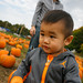 Pumpkin Picking-44