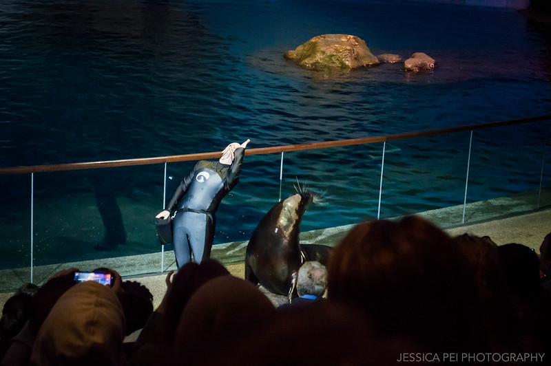 Sea Lion Show in Chicago Shedd Aquarium