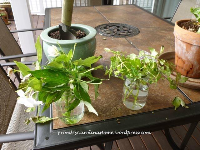 cuttings in jars