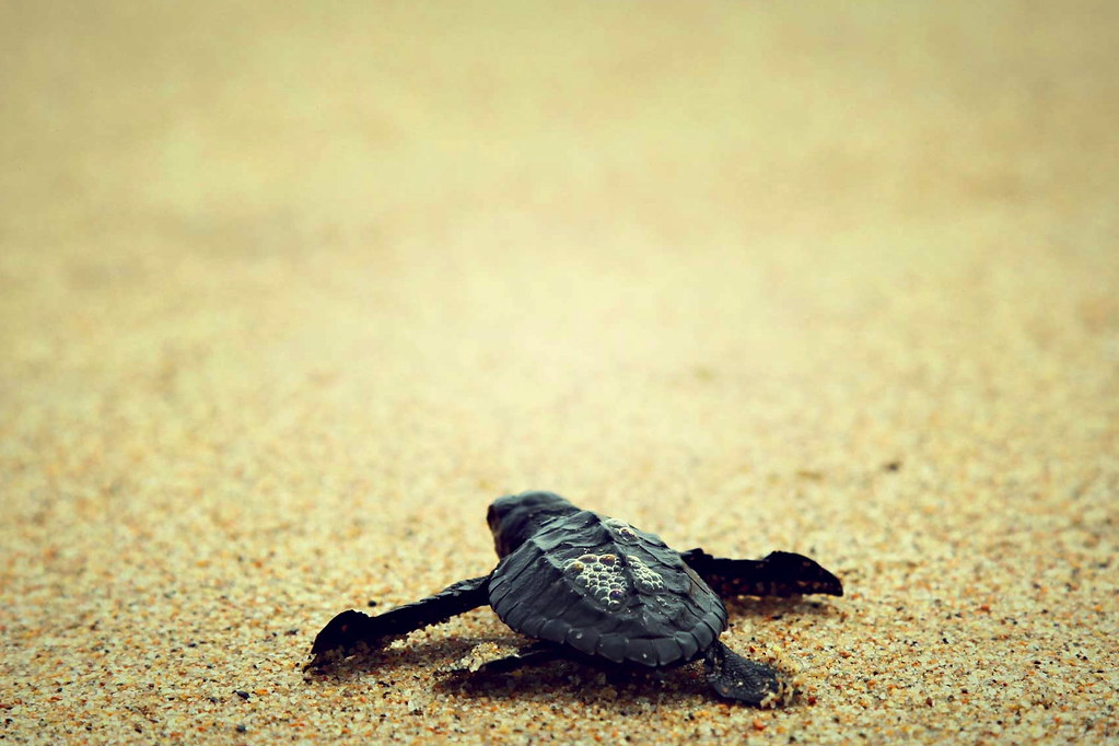 Baby turtle travel experience