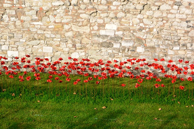 Tower of London poppies: Blood swept lands and seas of red