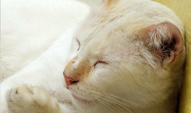 Cat3sharpness100