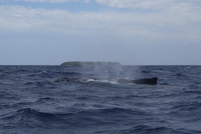 09252014 Whale In Reef