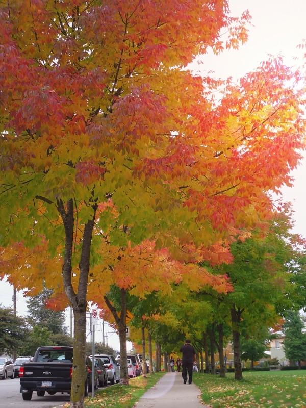 我家周围的秋色