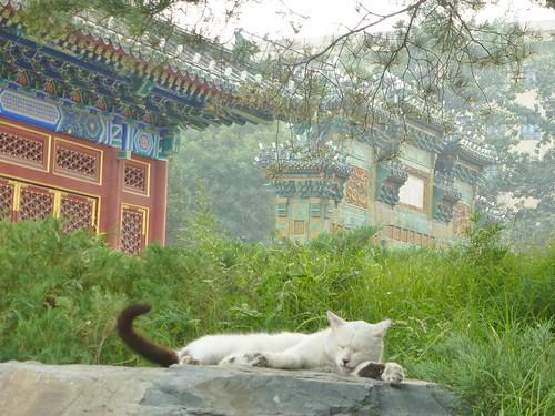 Beijing-Parc Beihai-j7 (19)