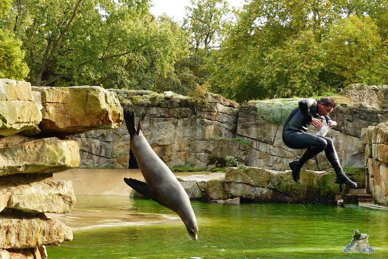 Zoo Berlin 41