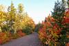 DSC00904B - Path to Mary Ann Falls