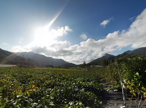 시골집 풍경