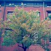 Fall colors and red brick, 10/21/14