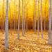 Tree Life by Desert Sun Images