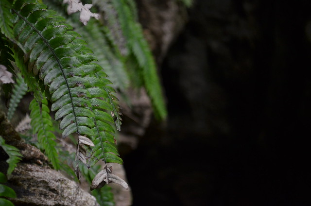 Fern detail - Abbey Caves