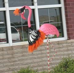 macaw(0.0), animal(1.0), wing(1.0), flamingo(1.0), bird(1.0),