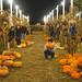 2014-10-28 SFSU Pumpkin Patch - Omada Zois LG