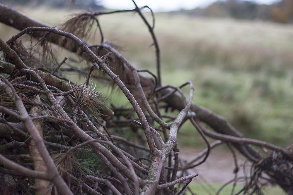 lyme-park-branches