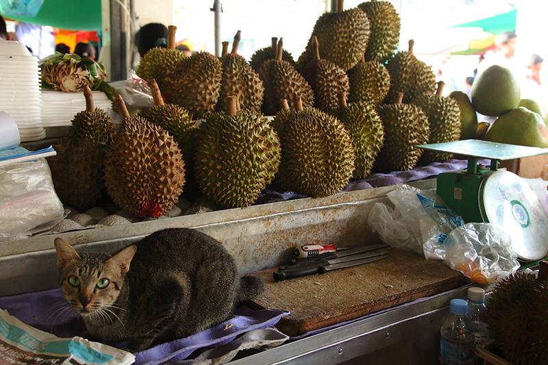 Cat-Durian