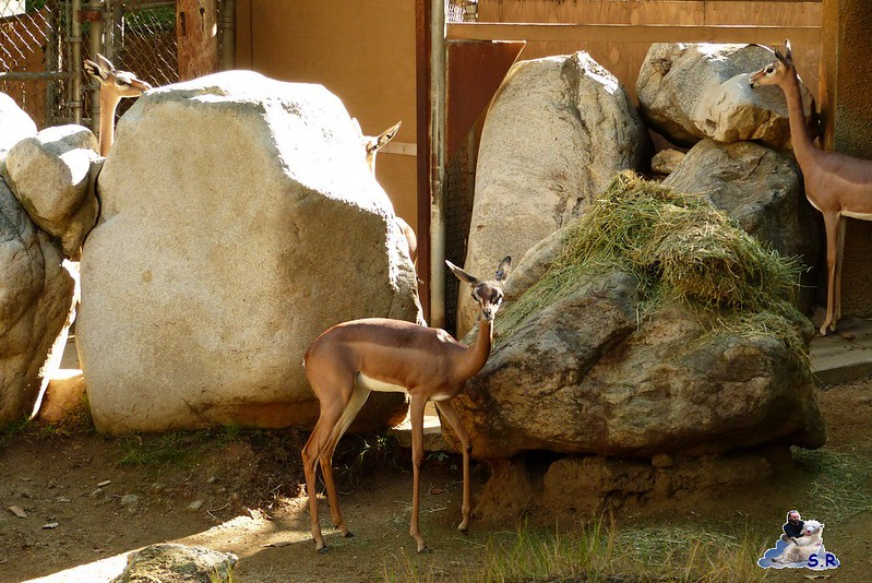 Los Angeles Zoo 125
