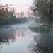 Morning fog in the marsh by pjricchio