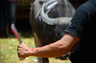 Anticipation: Man vs Bull