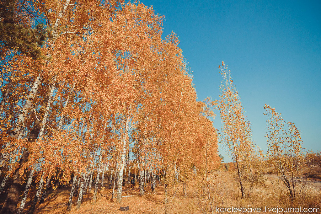 Autumn-011