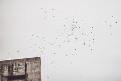 Birds #295/365