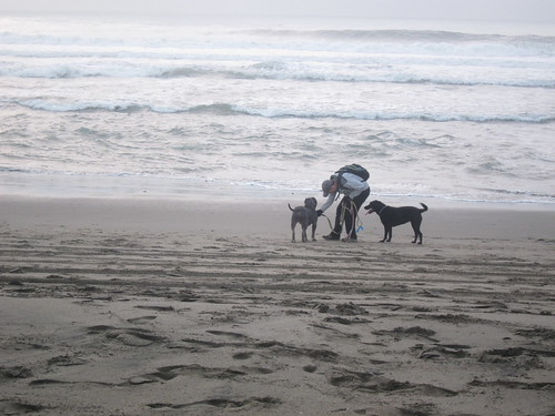 beach and dogs