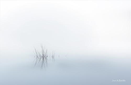 acecho neblina ella