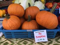 Pumpkins in Seattle. September 2014