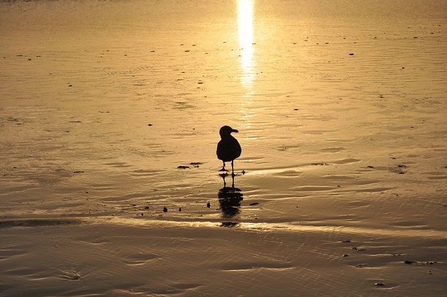 Silhouetted Seagull at the shore