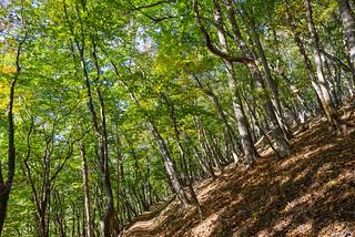 ゴールはもう少し・・・青々とした樹林帯