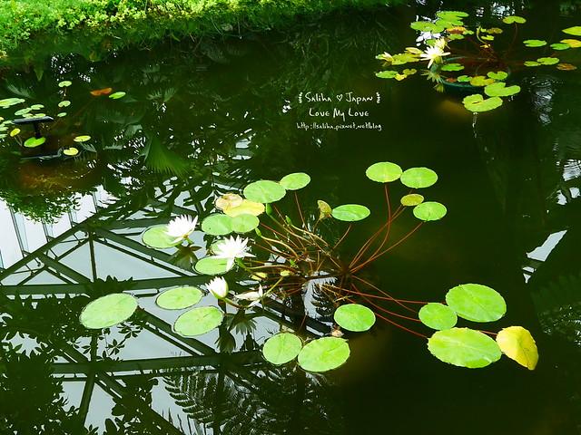 日本東京景點新宿御苑溫室植物 (21)