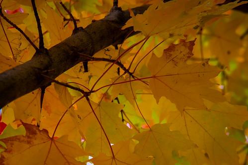 autumn fall nature colors minnesota canon landscape is woods fallcolors mk2 5d 70200 f4l 70200f4lis canon5dmk2