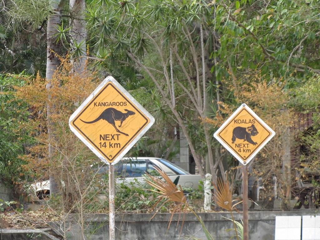 Carteles en la carretera de canguros y Koalas